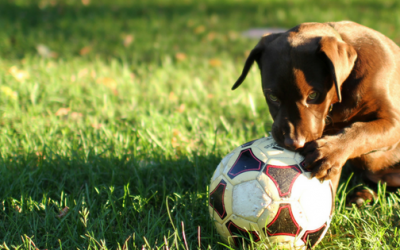 Best Backyards for Your Four-Legged Friend